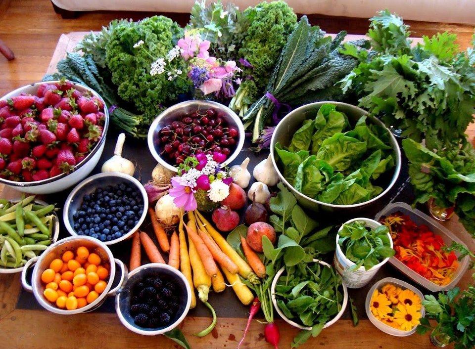 Populaire Frasi, citazioni e aforismi sul cibo e l'alimentazione  AP59